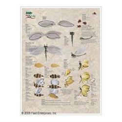 Руководство по обучению технике Двойной мазок: Птицы и насекомые - фото 17080