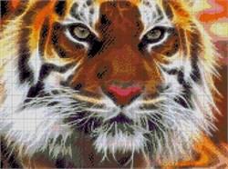 Набор для вышивки бисером  Амурский тигр - фото 26024