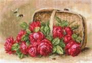 Рисунок на канве  Знойный розы