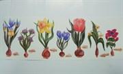 Интерьерная переводная картинка  Весенние цветы