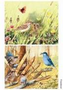 Скрап-карта  Птицы 1