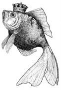 Штамп силиконовый  Золотая рыбка