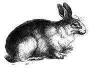 Штамп силиконовый  Кролик