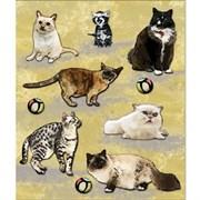 Наклейки  Животные  Котики