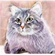 Бумага рисовая  Кошки