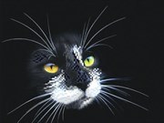 Рисунок на шелке  Черный кот