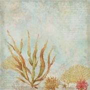 Бумага  Морские водоросли