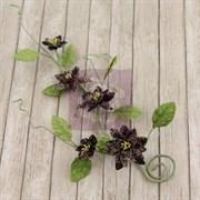 Цветы на стебле  Изысканное вино  (Prima Marketing Inc)