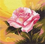 Рисунок на канве  Розовая прелюдия