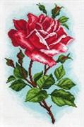 Рисунок на канве  Роза Осирия