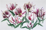 Набор для вышивания Gouverneur  Тюльпаны Рембрандта