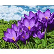 Набор для рисования по номерам 'Фиолетовые подснежники' 40*50см