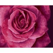 Набор для рисования по номерам 'Прекрасная роза' 40*50см