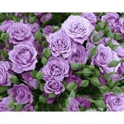 Набор для рисования по номерам 'Кустовые розы' 40*50см